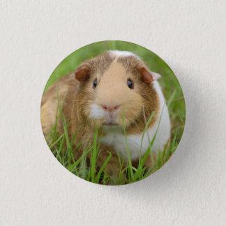 Cute Domestic Guinea Pig Pinback Button