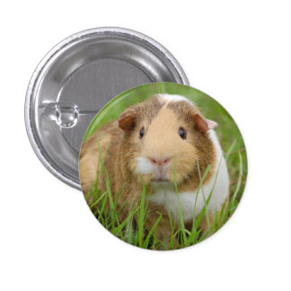 Cute Domestic Guinea Pig Pinback Button