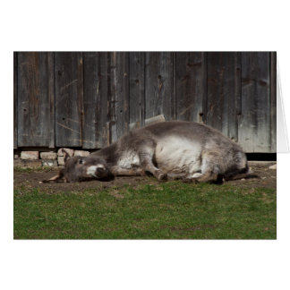 Cute Donkey Resting After A Sand Bath Cards