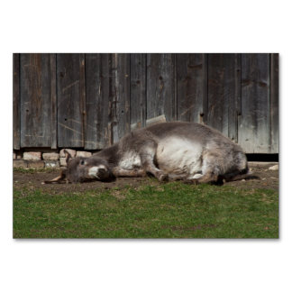 Cute Donkey Resting After A Sand Bath Table Cards