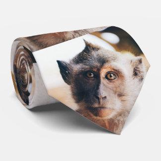 Cute Dreamer face Asian Macaque monkey tie