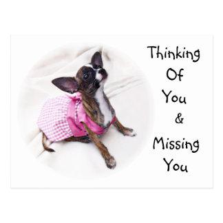 Cute Dressed Up Chihuahua Girl Postcard
