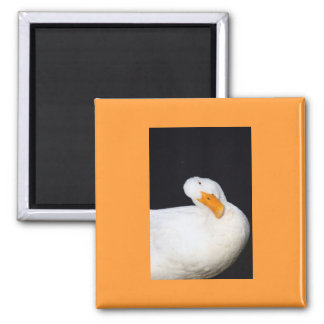 Cute Duck 2 Inch Square Magnet