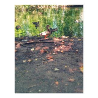 Cute duck photo letterhead