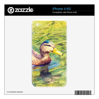 Cute Duck Swimming Decals For The iPhone 4