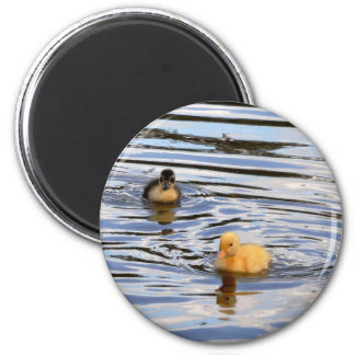 Cute Ducklings 2 Inch Round Magnet
