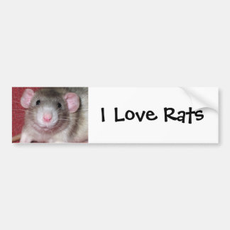 Cute Dumbo Rat Car Bumper Sticker