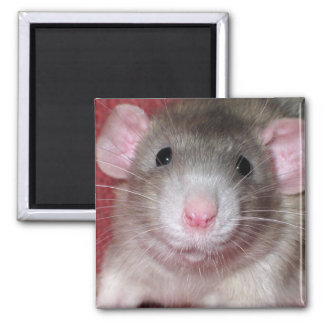 Cute Dumbo Rat 2 Inch Square Magnet