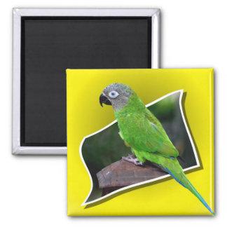 Cute Dusky Headed Conure Parrot Bird Magnet