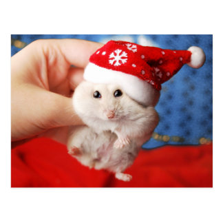 Cute dwarf hamster Tutku with Santa Claus hat Postcard