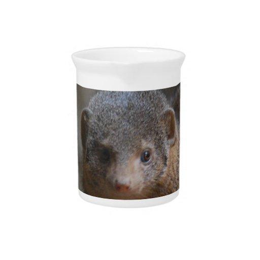 Cute Dwarf Mongoose Beverage Pitcher