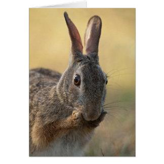 Cute Eastern Cottontail Rabbit Photo - Wildlife Card