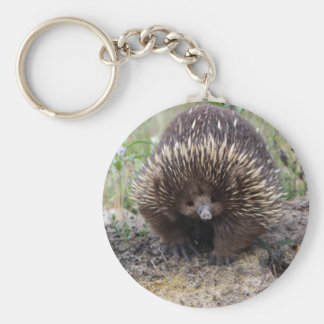 Cute Echidna from Australia Basic Round Button Keychain