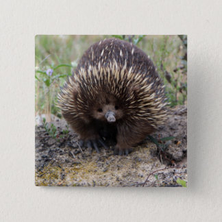 Cute Echidna from Australia Button