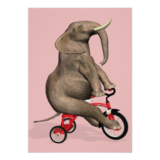 Cute Elephant Riding A Tricycle Poster