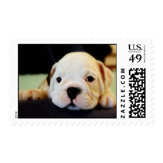 Cute English Bulldog Puppy Postage Stamps