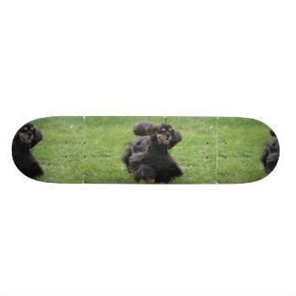 Cute English Cocker Spaniel Skate Board