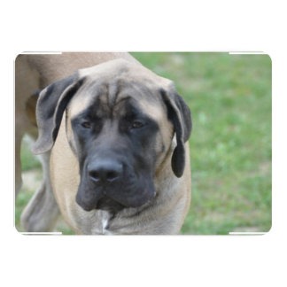 Cute English Mastiff 5x7 Paper Invitation Card