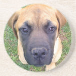 """Cute English Mastiff Puppy close-up photo Coaster<br><div class=""""desc"""">Let the young English Mastiff dog guard your drink for you. No one will bother it while she is on guard duty. Just be sure to check it for Mastiff doggie drool!</div>"""