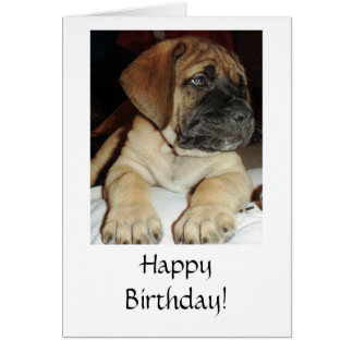 Cute English Mastiff Puppy photo - Happy Birthday Card