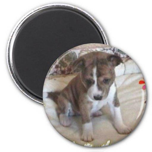Cute Enough Basenji Pup Magnet