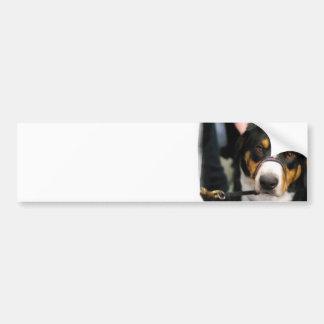 Cute Entlebucher Mountain Dog Bumper Sticker Car Bumper Sticker