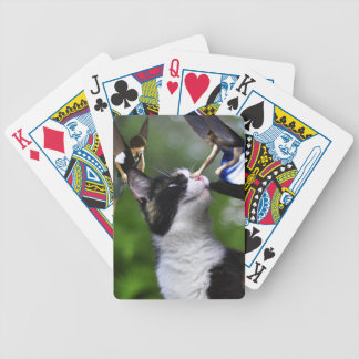 Cute Fairies and Cat Playing Cards