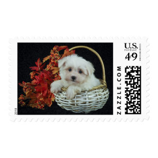 Cute Fall Puppy Postage
