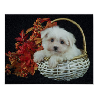 Cute Fall Puppy Poster