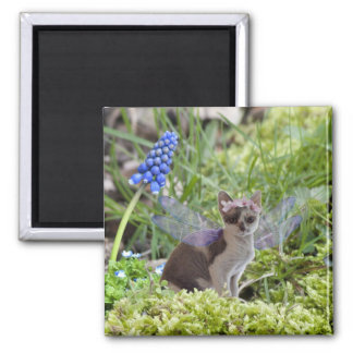 Cute fantasy fairy kitten 2 inch square magnet
