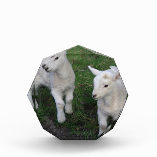 Cute Farm Ranch Baby Twins Sheep Lamb Awards