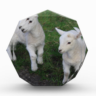 Cute Farm Ranch Baby Twins Sheep Lamb Acrylic Award