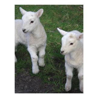 Cute Farm Ranch Baby Twins Sheep Lamb Letterhead Design