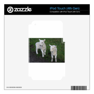 Cute Farm Ranch Baby Twins Sheep Lamb iPod Touch 4G Decal