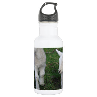Cute Farm Ranch Baby Twins Sheep Lamb Water Bottle