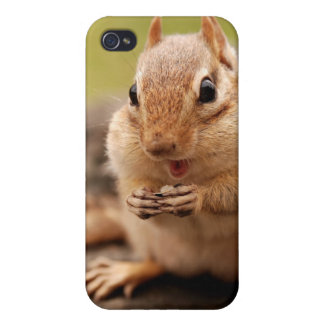 Cute Fat and Fluffy Chipmunk Snacking Cover For iPhone 4
