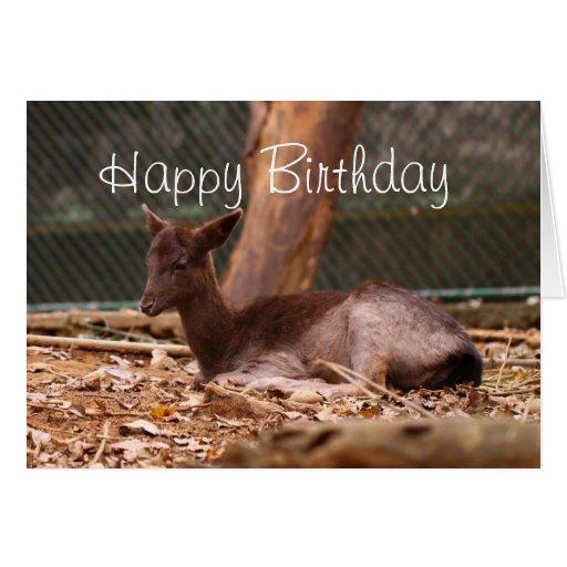 Cute Fawn Birthday Greeting Card
