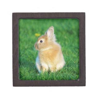 Cute Fawn Bunny Sitting in Grass Keepsake Box