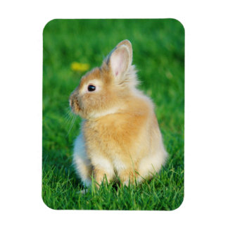 Cute Fawn Bunny Sitting in Grass Magnet