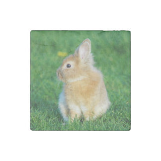 Cute Fawn Bunny Sitting in Grass Stone Magnet