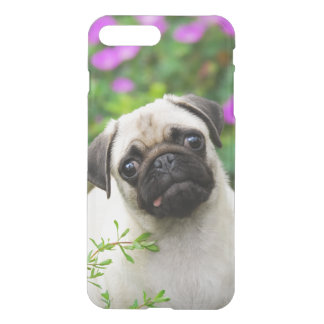 Cute Fawn Colored Pug Puppy, Clear Cover