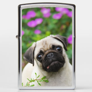 Cute Fawn Colored Pug Puppy Dog Portrait windproof Zippo Lighter