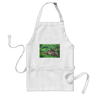 Cute fawn lying down in forest with mother adult apron