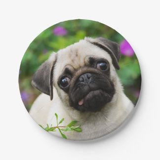 Cute Fawn Pug Puppy Dog Portrait, Happy Party Paper Plate