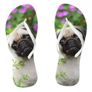 Cute fawn pug puppy flip flops
