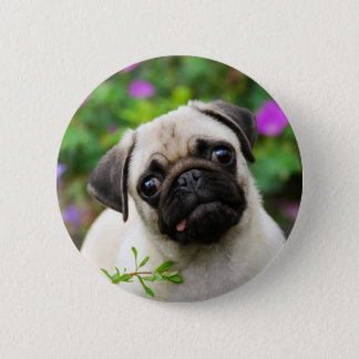 Cute fawn pug puppy pinback button
