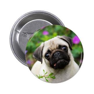 Cute fawn pug puppy pinback button
