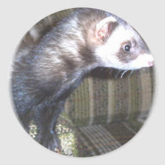 Cute Ferret Pictures and Sayings Classic Round Sticker