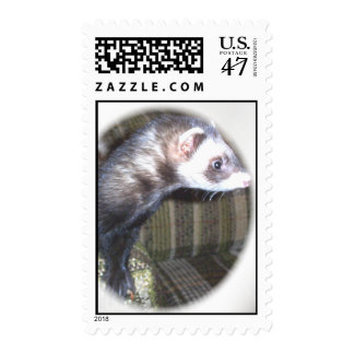 Cute Ferret Pictures and Sayings Postage