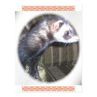 Cute Ferret Pictures and Sayings Postcard